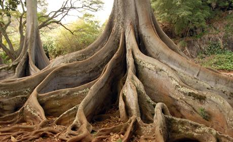 treeRootslong